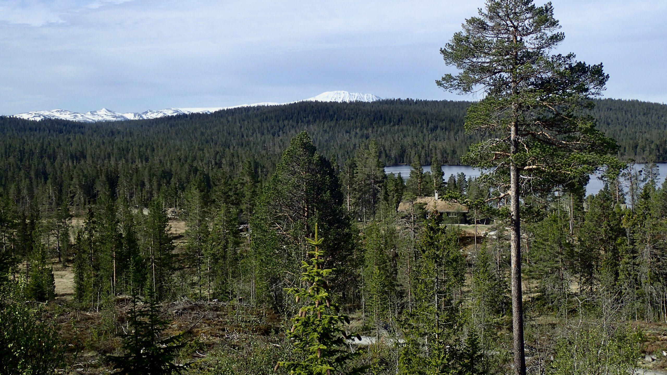 Gaustatoppen sett fra Skirvedalen